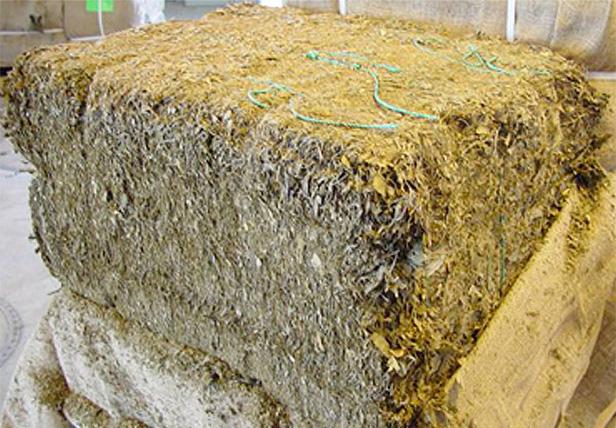 quá trình sản xuất ginkgo biliba asahi