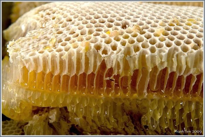 Tìm hiểu về tác dụng của sáp ong